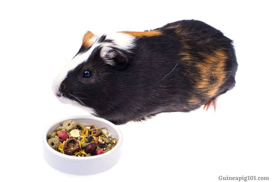 Best Treats For Guinea Pig