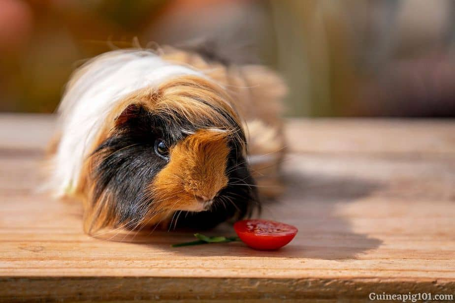 Guinea pig treat