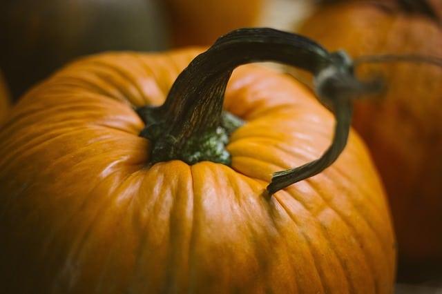 Can guinea pigs eat pumpkin stems?