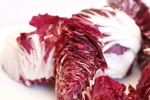 Can guinea pigs eat radicchio lettuce every day?