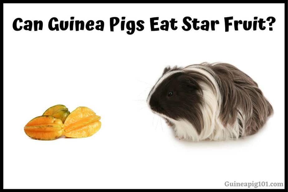 Can Guinea Pigs Eat Star Fruit