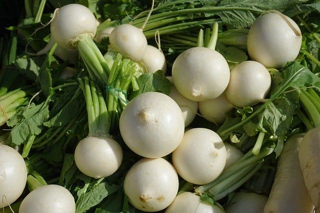 How many turnips can guinea pigs eat at a time?