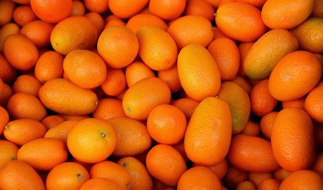 Do guinea pigs like kumquat?