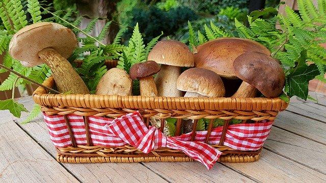 Guinea pigs and Mushroom