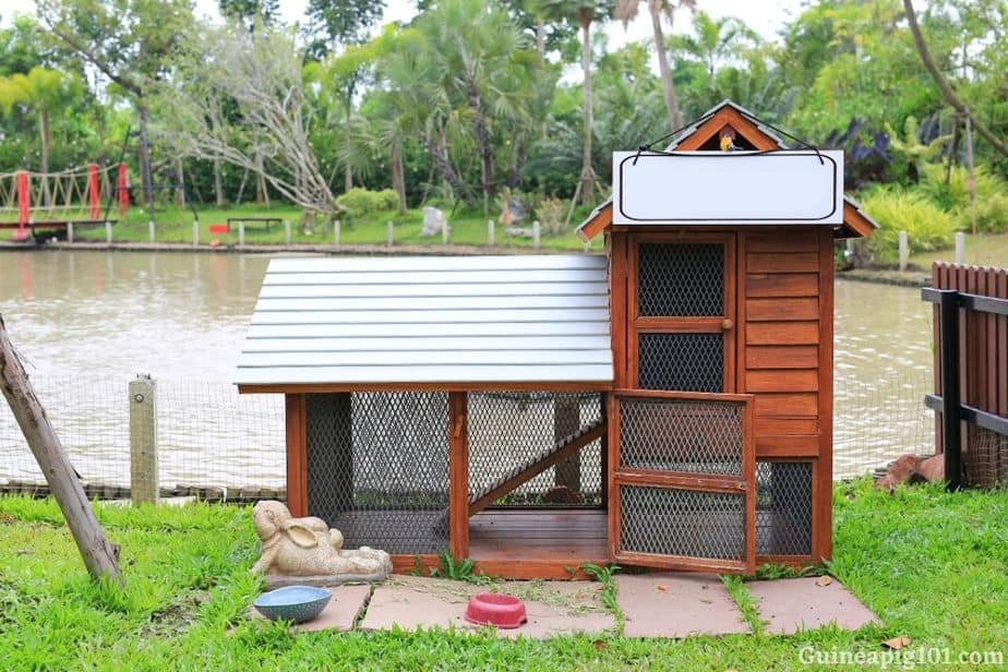 Keeping guinea pigs outdoor