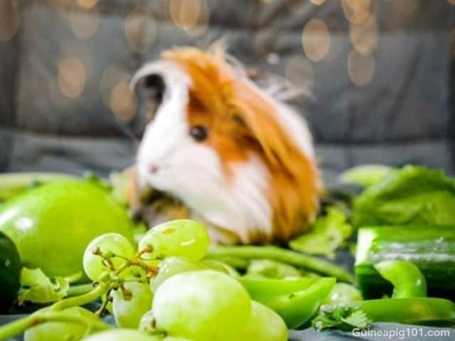 can guinea pigs eat grapes seeds