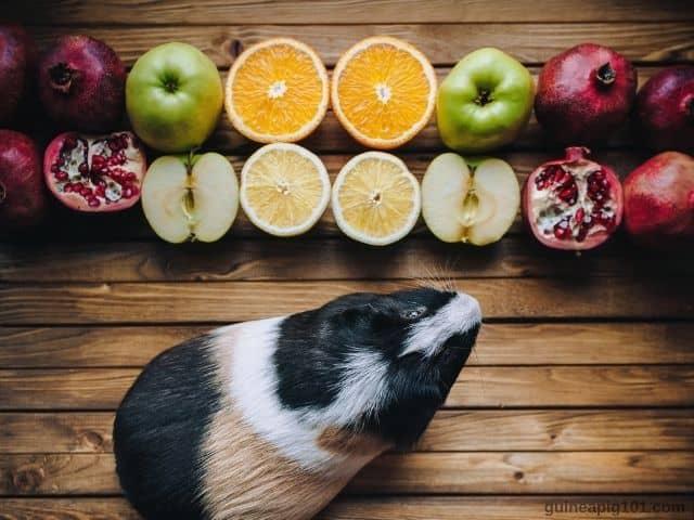 do guinea pigs eat pomegranate